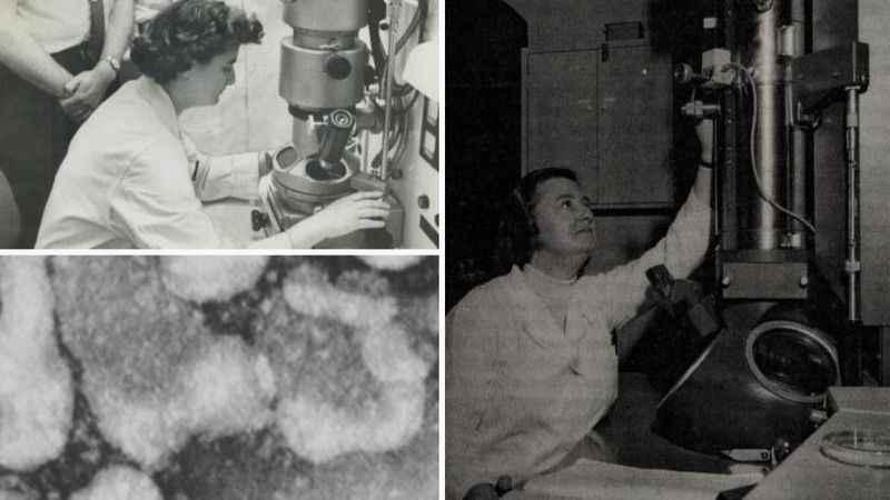 Koronavirüs ilk kez 1964'te keşfedildi! İşte virüsü bulan bilim ...